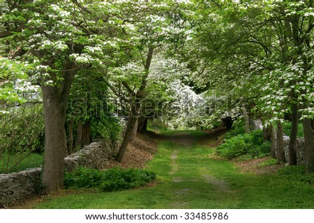 Dogwood Lane, Virginia State Arboretum in Spring Horizontal - stock photo