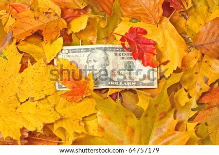 Dollar banknote in  yellow autumn leaves