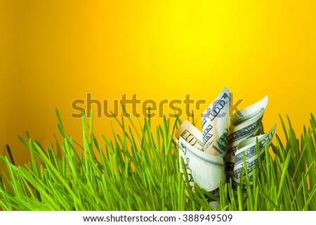 Dollar banknotes in green grass. Currency growth. Financial concept.