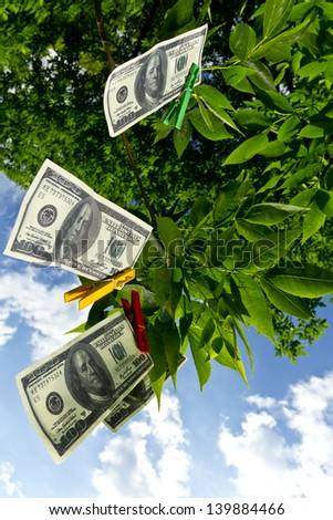 Dollar currency hanging on a green tree/Money tree