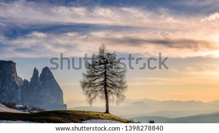 Dolomites. Landscape image of Seiser Alm a Dolomite plateau and the largest high-altitude Alpine meadow in Europe , lonely Tree