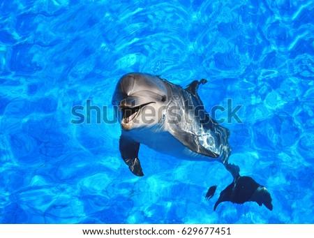 dolphin #629677451