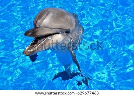dolphin #629677463