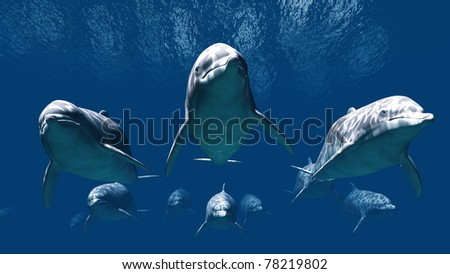 dolphin - stock photo