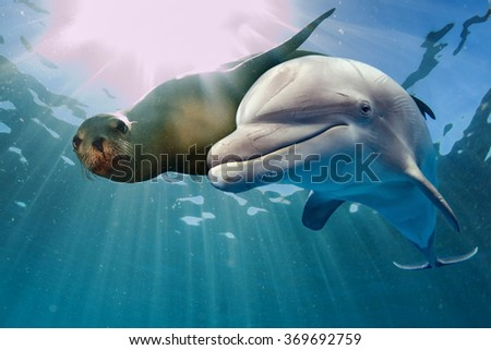 dolphin and sea lion underwater on ocean background looking at you