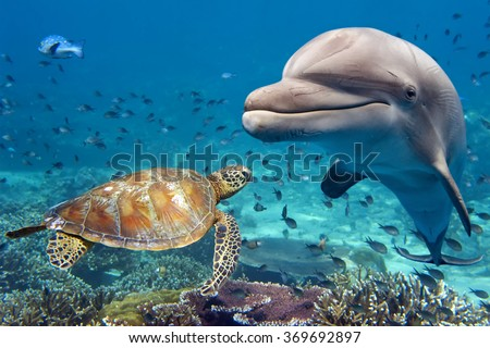 stock photo dolphin and turtle underwater on reef background looking at you 369692897 - Каталог — Фотообои «Море, пляж»