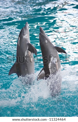 dolphin attraction
