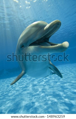 dolphin close up