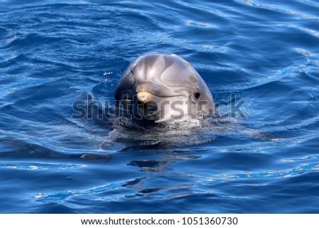 Shutterstock dolphin in ocean