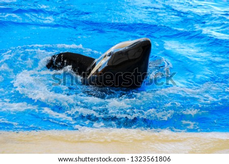 dolphin in water, beautiful photo digital picture