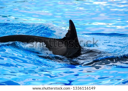 dolphin in water, digital photo picture as a background