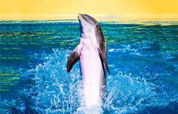 Dolphin jump and play in water