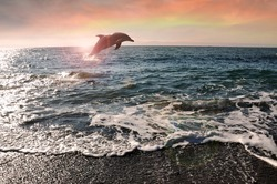 Dolphin jumped from water in the evening