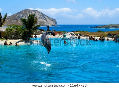 Dolphin jumping in the pool