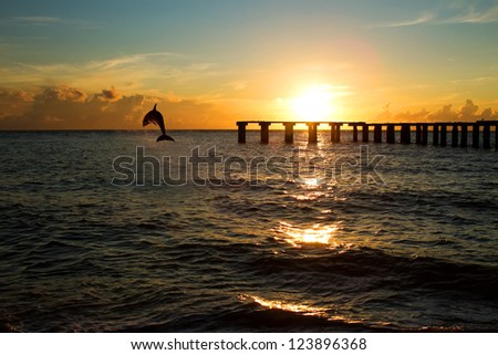 dolphin jumping out of the sea in florida #123896368