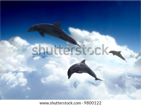 dolphin swim in the sky