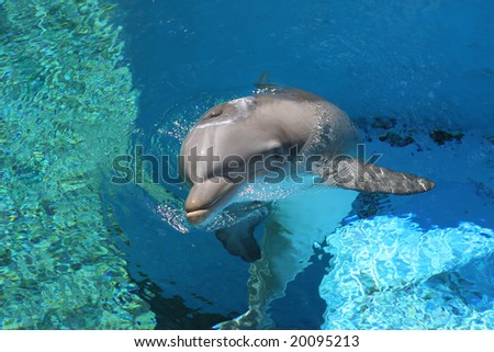 Dolphin Swimming to Surface Near a Coral Reef