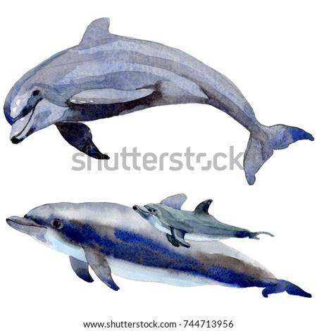 dolphin wild mammals in a...