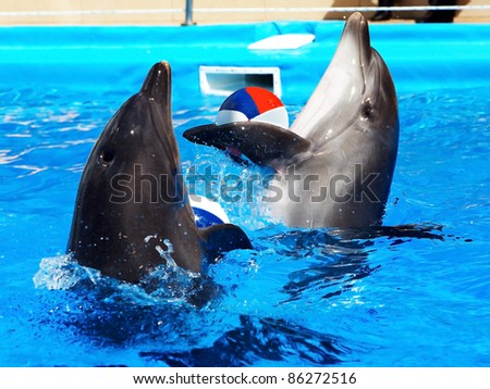 Dolphin with ball in blue water.