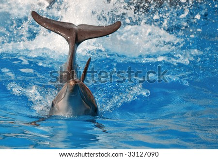 dolphing splashing the water with his tail