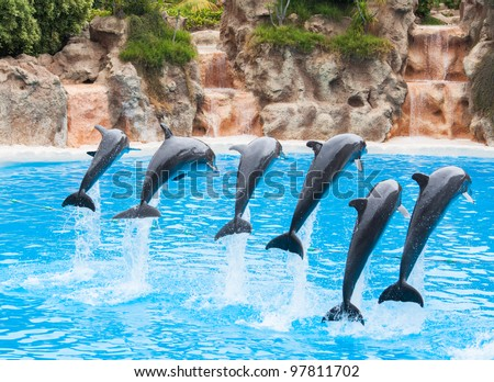 Stock Photo Dolphins