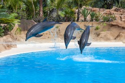 Dolphins doing a show in the swimming pool of amusement park