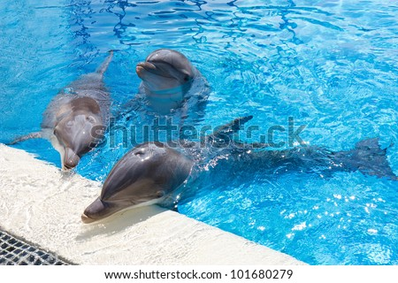 Dolphins in a pool