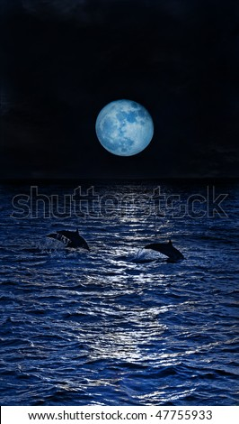 Dolphins jumping in the moonlight at the Maldives