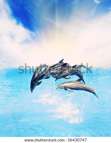 Dolphins jumping in the sea