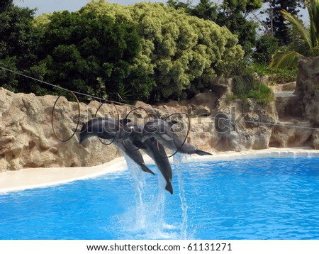 Dolphins jumping through the hoops during dolphin show