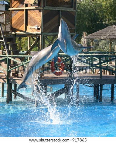 dolphins leaping out of the pool together