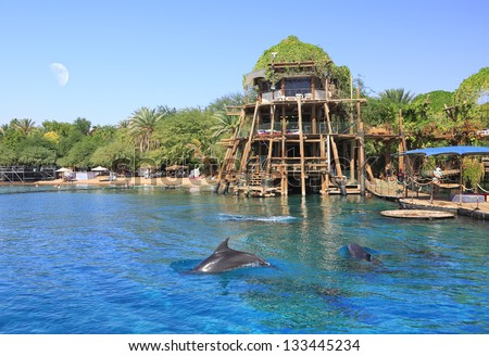 Dolphins near the beautiful beach of Red sea