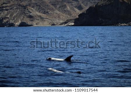 dolphins near the island #1109017544