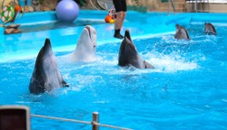 dolphins perform at the dolphinarium