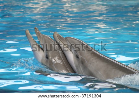 Dolphins playing in a pool
