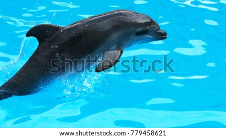 dolphins swimming in the clear blue water of the pool closeup #779458621