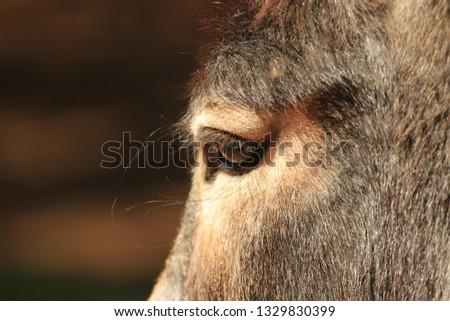 Domestic animals - animal eyes - eye of a donkey #1329830399