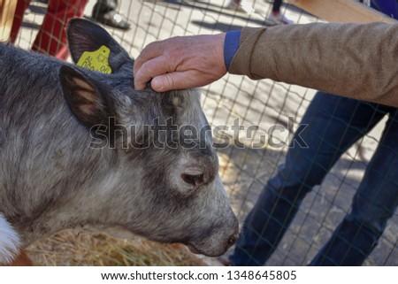 Domestic animals around the city #1348645805
