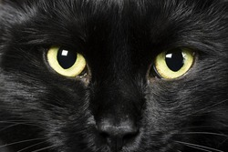 domestic animals: close-up of cat eyes