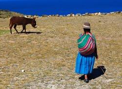 Domestic animals on the island, island, donkey and woman, Isla del Sol, Titicaca lake, Bolivia