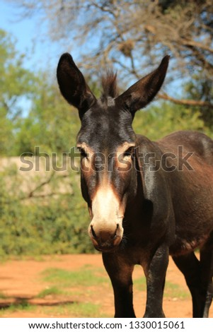 Domestic animals - portrait of a donkey male #1330015061