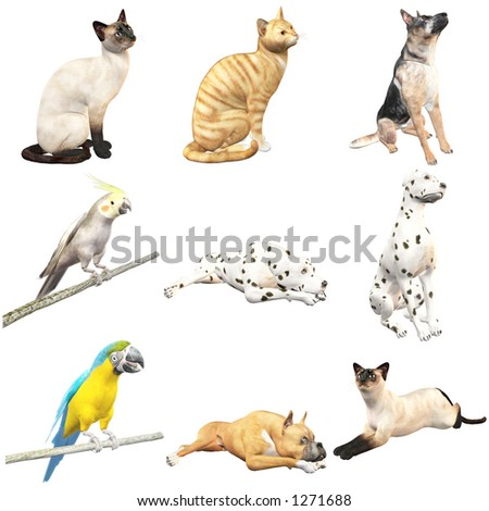 Domestic Animals (with clipping paths)