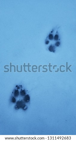 domestic canine tracks #1311492683