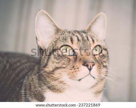 domestic cat close-up shot - retro, vintage style look