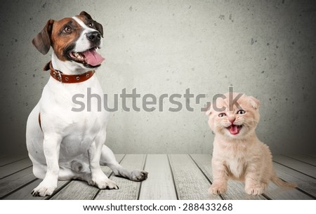 Domestic Cat, Kitten, Humor.