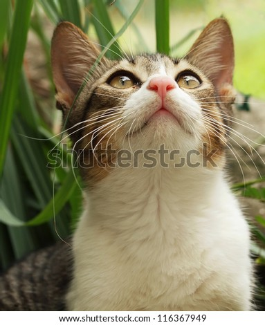 Domestic cat looking upwards