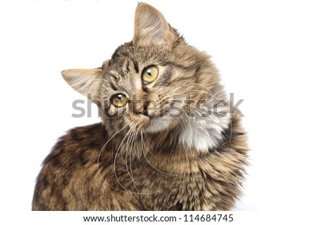 Domestic cat on white background.