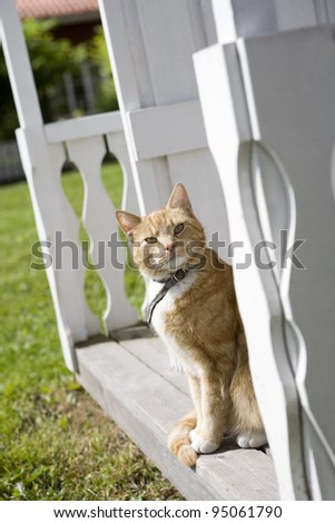 Domestic cat sitting on a bench