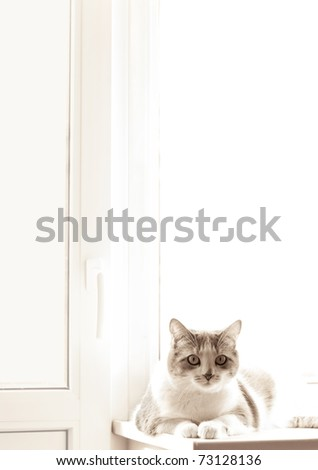 domestic cat sitting on a white window sill