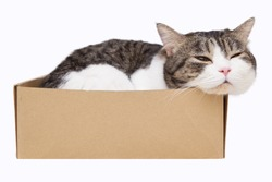 domestic cat sleep in box on white background